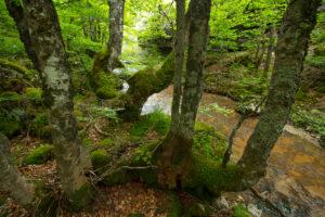 The Central Apennines rewilding area, Italy, in and around the Abruzzo, Lazio e Molise National Park.